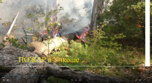 Пожар в Ялте август 18 глазами очевидца.
